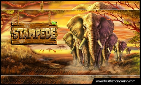 Betsoft Gaming unveils new game called Stampede slot