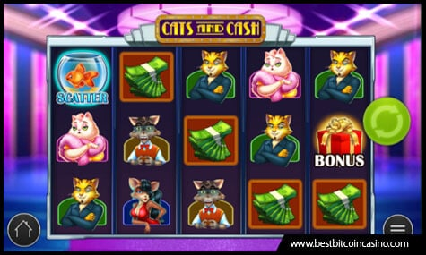 Become a Winner on Cats and Cash