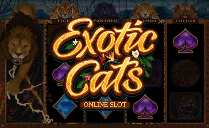 Microgaming Launches New Feline-Themed Slot Exotic Cats